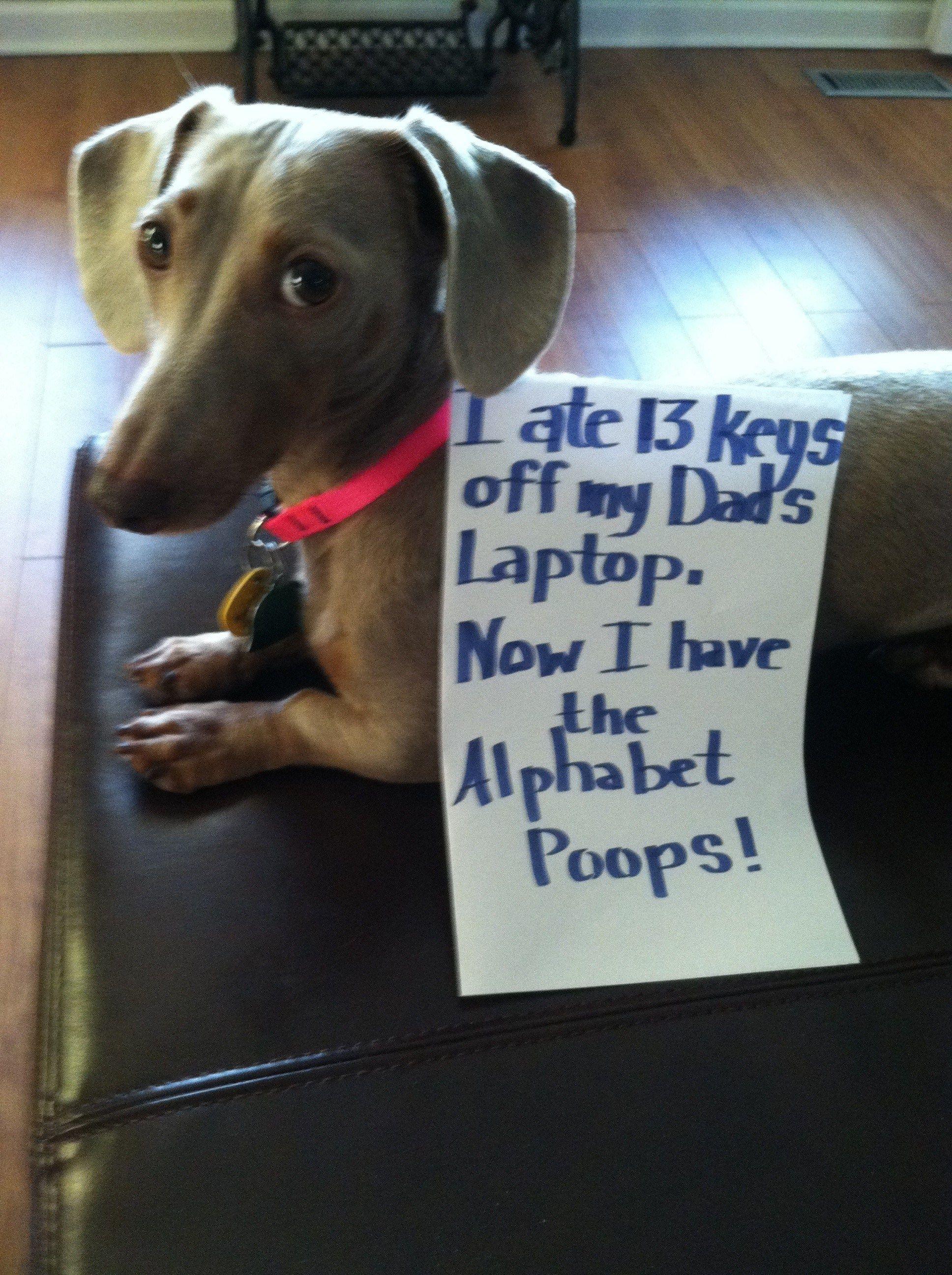 Izzie Monster Dog Shaming Dog Shaming Funny Funny Dog Pictures