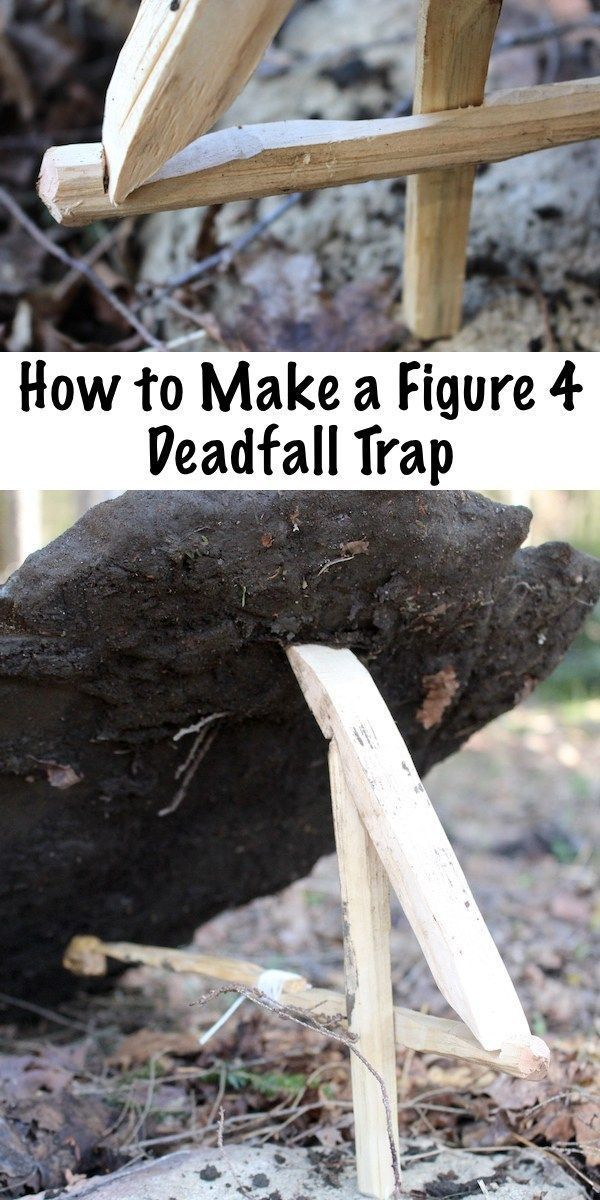 Photo of How to Make a Figure 4 Deadfall Trap to remove unwanted pests from your homestea…