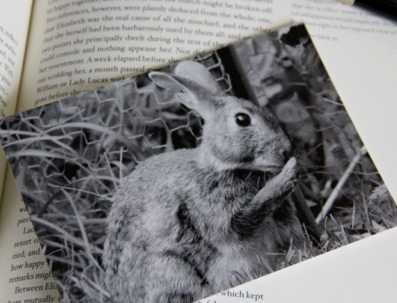 Pair of Rabbit Photo Postcards  Shush  Cute by scribbledfieldnotes, $3.50