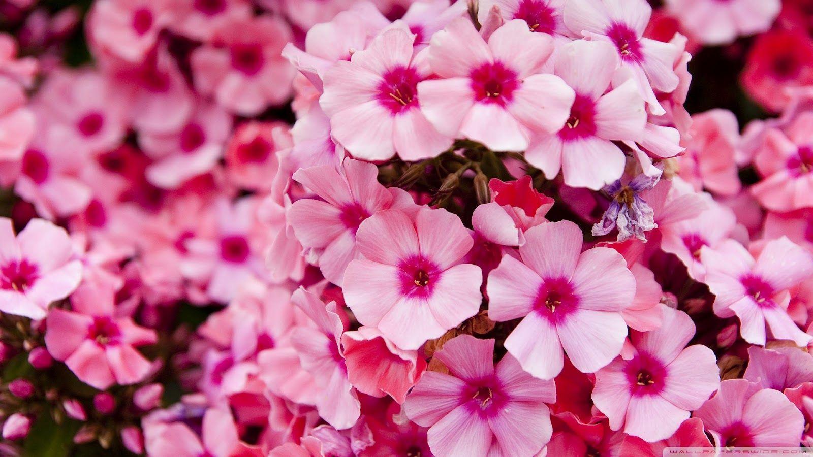 Flowers Pink Garden Pink Flowers Wallpaper Flower Garden