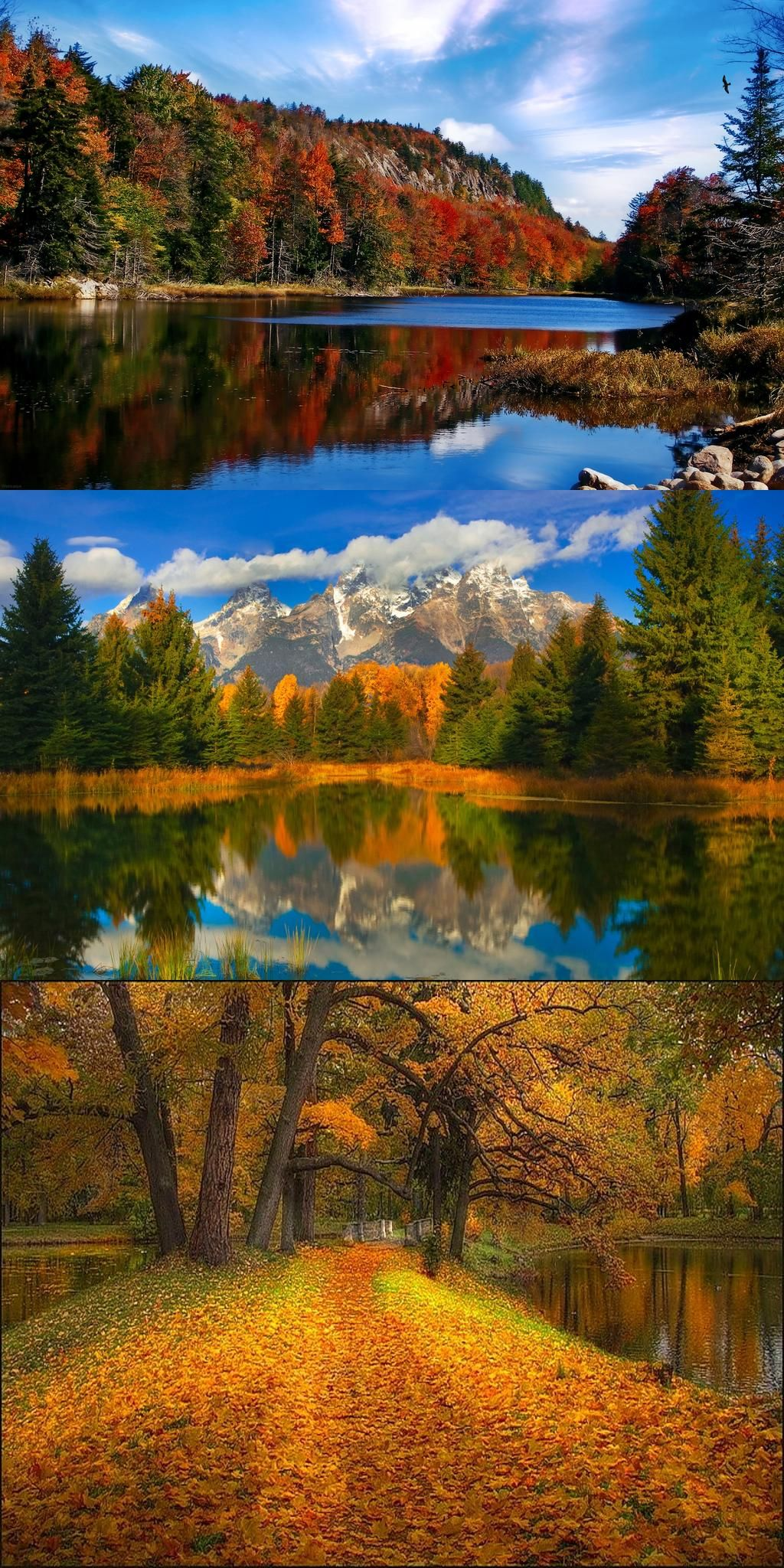 Pin By Eillen Berns On Forest Autumn Colors Grand Teton National Park Teton National Park National Parks Wyoming