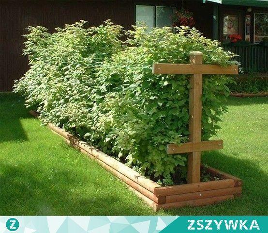 Maliny w ogrodzie szukaj w google sommerhus pinterest for Organiser un jardin
