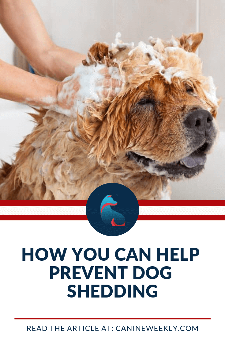 Most Dog Owners Realized That Using Dog Shampoo Intended To Decrease Shedding Helps The Regularity Of The Bath Will Best Dog Shampoo Dog Grooming Dog Shampoo