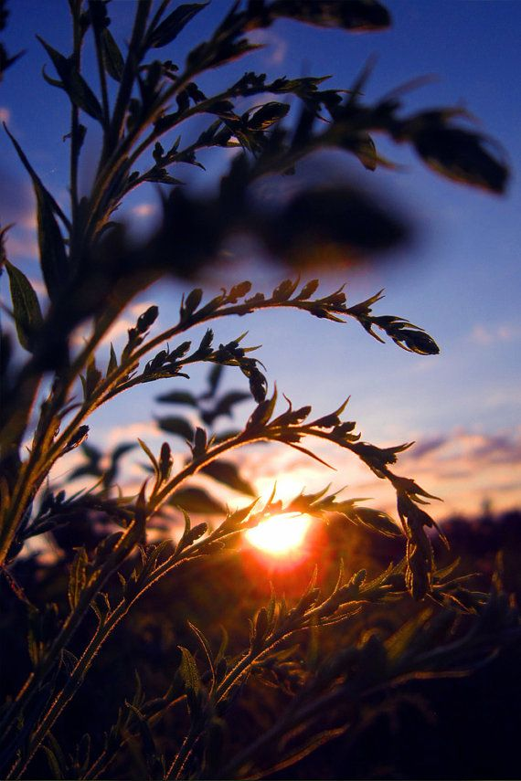 Nature Photography Sun Sunset Warm Sky By MooziXMerchandising Lovely Macro That I Wish Could Do Regularly