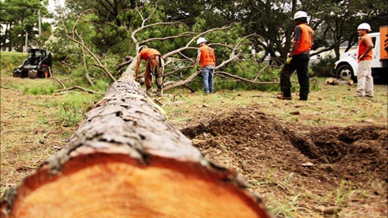 Tree Removal Service near Omaha Nebraska Omaha Junk