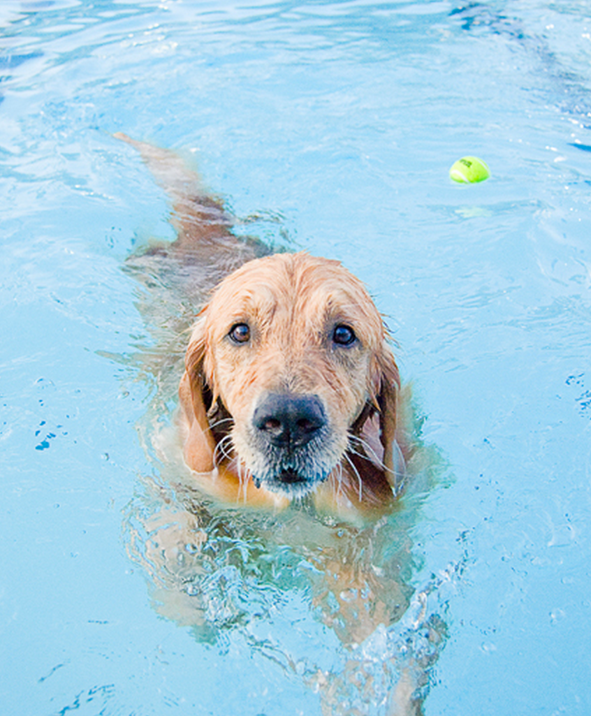 This Dog Does Her Own Thing At The Local Doggy Pool And It Ll Make You Smile Dog Swimming Dog Pool Golden Retriever