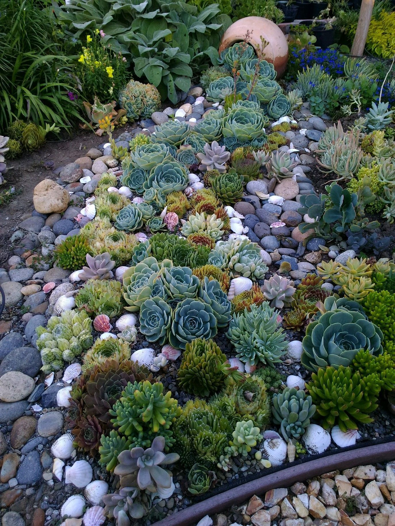 Spilling Succulents Creek Bed Easy To Install Looks Amazing Add Some Seashells As Acce In 2020 Succulent Garden Design Succulent Landscaping Rock Garden Landscaping