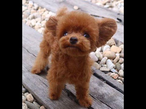 Must see Bear Brown Adorable Dog - c05385f85d9b4d81d066d1c3b2a53f49  Photograph_718589  .jpg