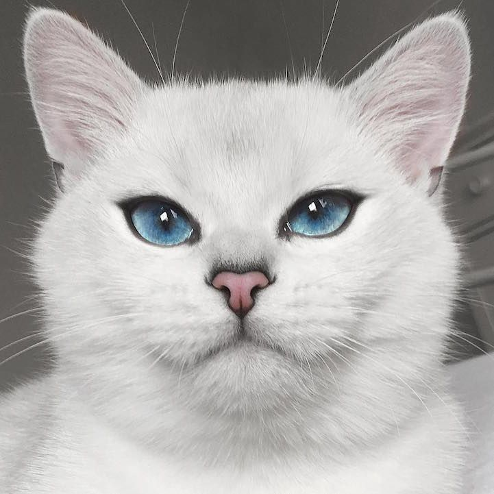 Everyone Is Falling In Love With This Cat With The Most Beautiful