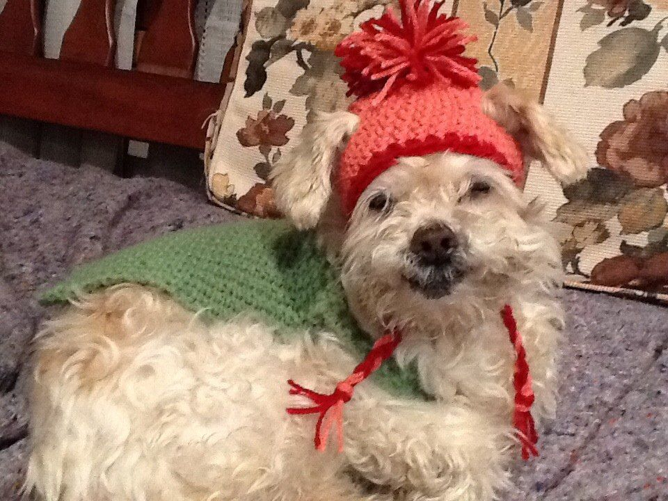 146710f5b gorro para perro tejido a crochet (ropa accesorio)