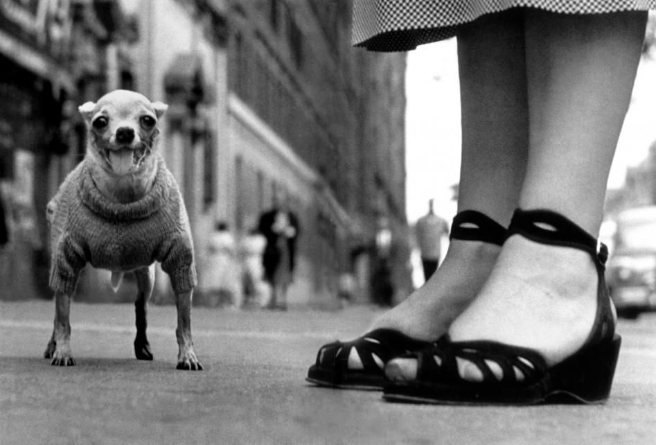 Chihua in a sweater elliott erwitt new york 1946
