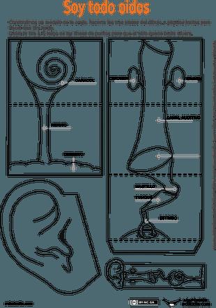 Oido interno | 2,3 ve 4.sınıflar döküman | Pinterest | Human body ...