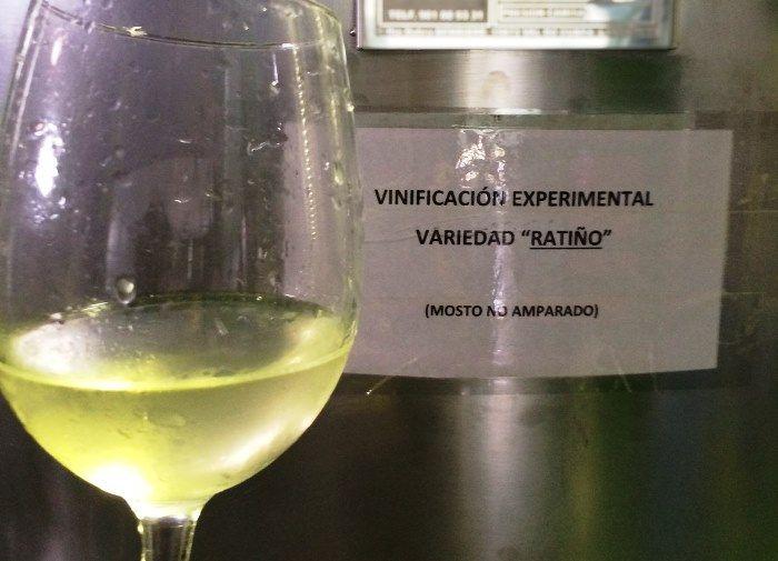 Viña Moraima inicia una vinificación experimental de #Ratiño en colaboración con la Misión Biológica de Galicia via @vinetur