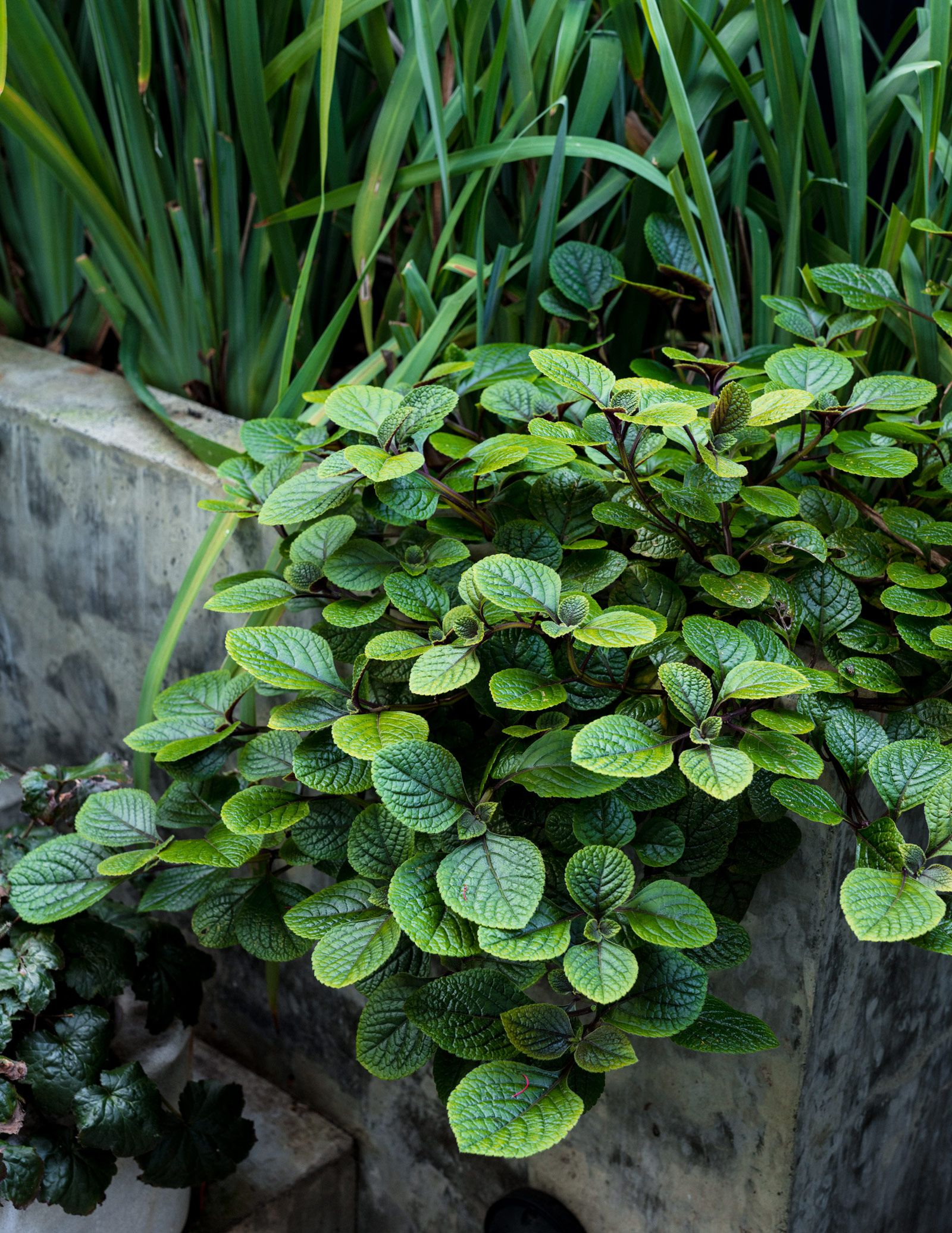 Plant/Life: Sean Cook | Plants, Drought tolerant garden