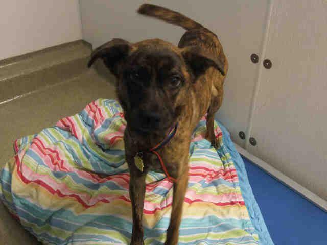 Adopt A Pet Humane Society Of Missouri Http X2f X2f Www Hsmo Org Humane Society Dog Adoption Pets