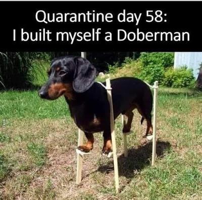 Dear Abby On Height Funny Dachshund Funny Animal Memes Funny Dog Memes