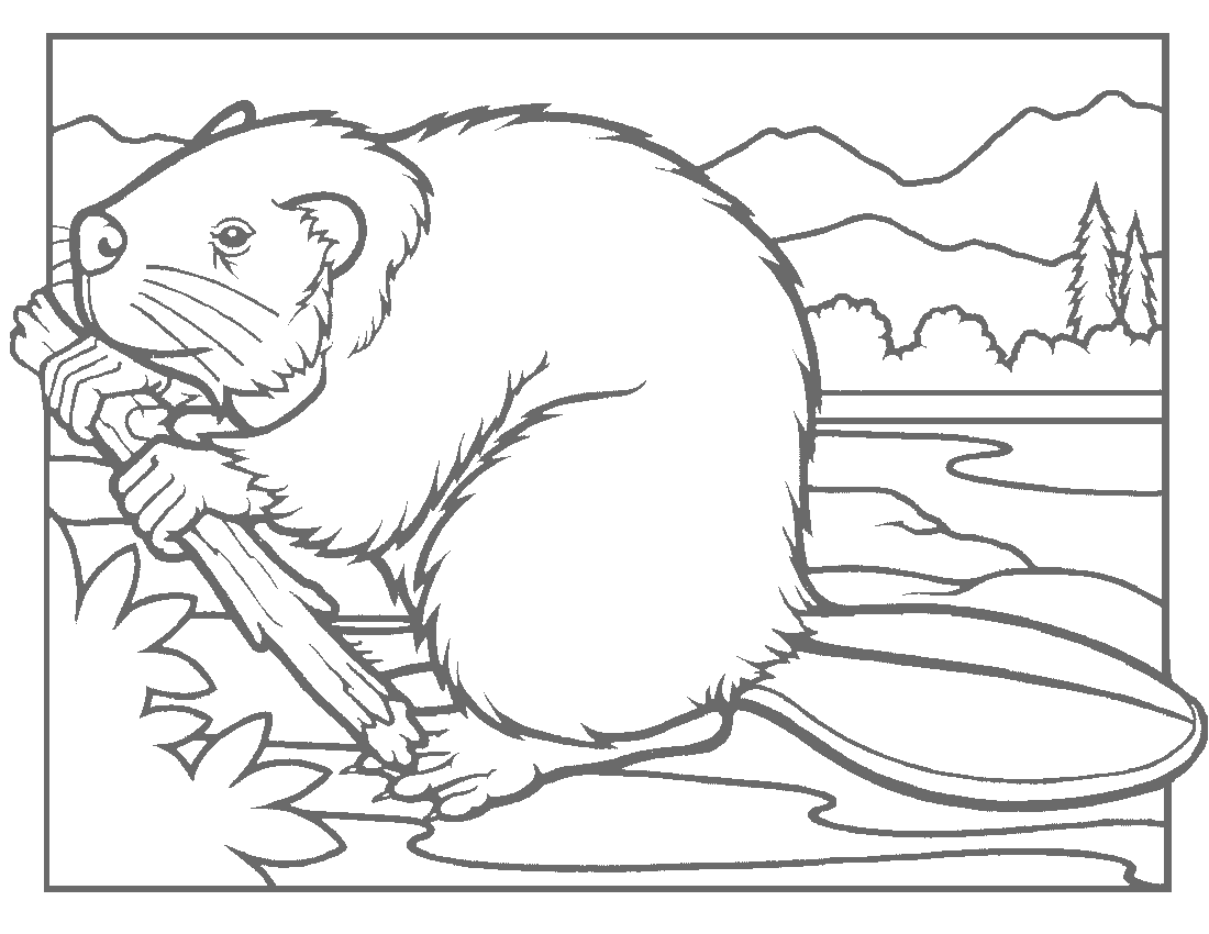 beaver coloring page Coloring