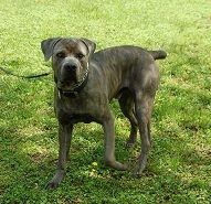 Pin On Adoptables On Petfinder