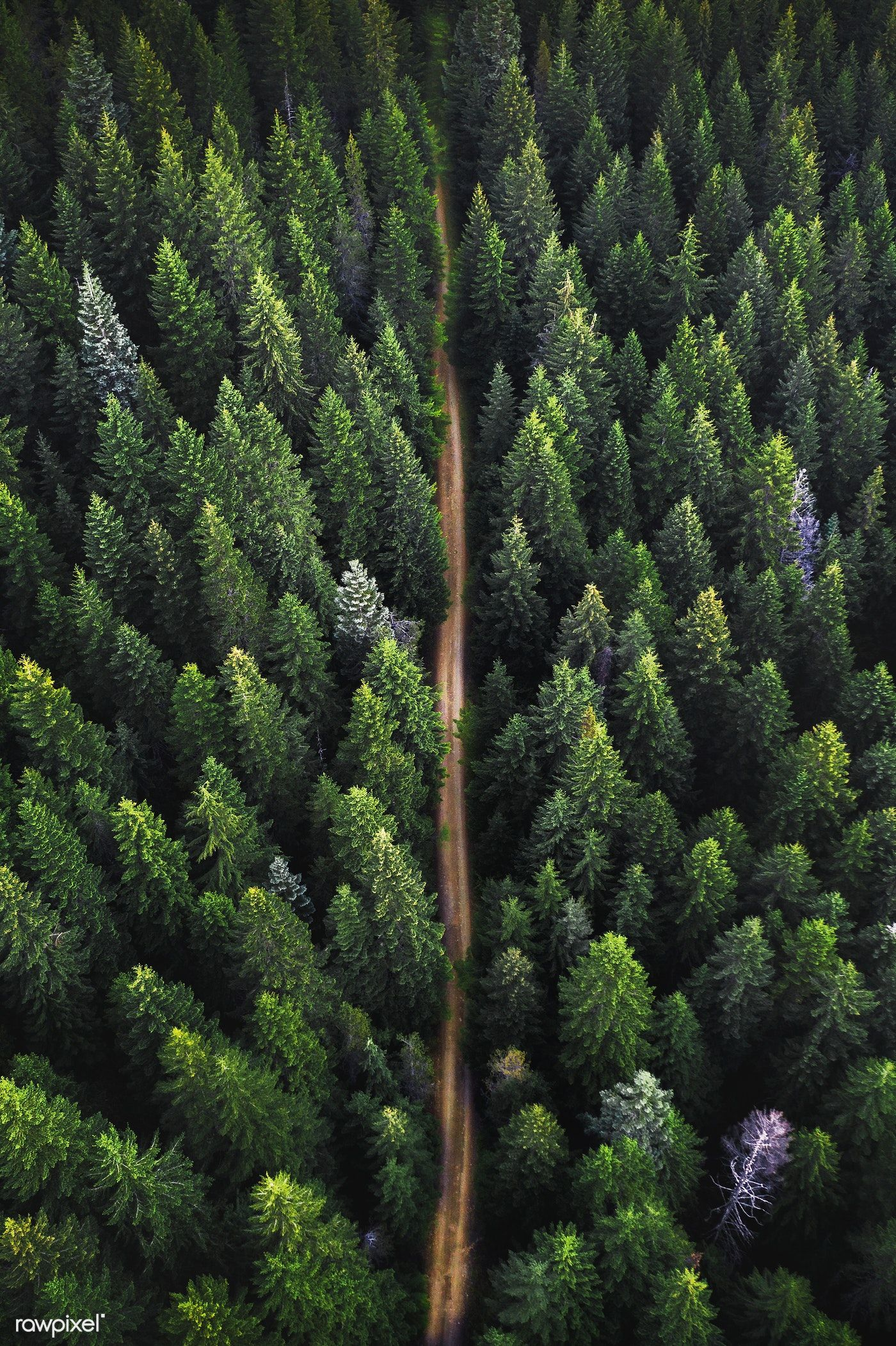 Drone View Of A Green Forest And A Dirt Road Passing Through Premium Image By Rawpixel Co Landscape Photography Nature Drone Photography Landscape Drone View