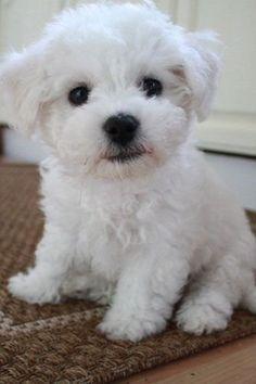 Cute Pet Finalist: Teddy