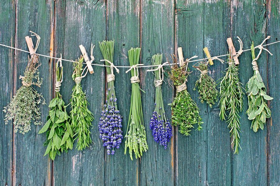 علاج التهاب البروستاتا بالاعشاب الطبيعية بدون ادوية موسوعة Medicinal Plants Medicinal Herbs Preserve Fresh Herbs