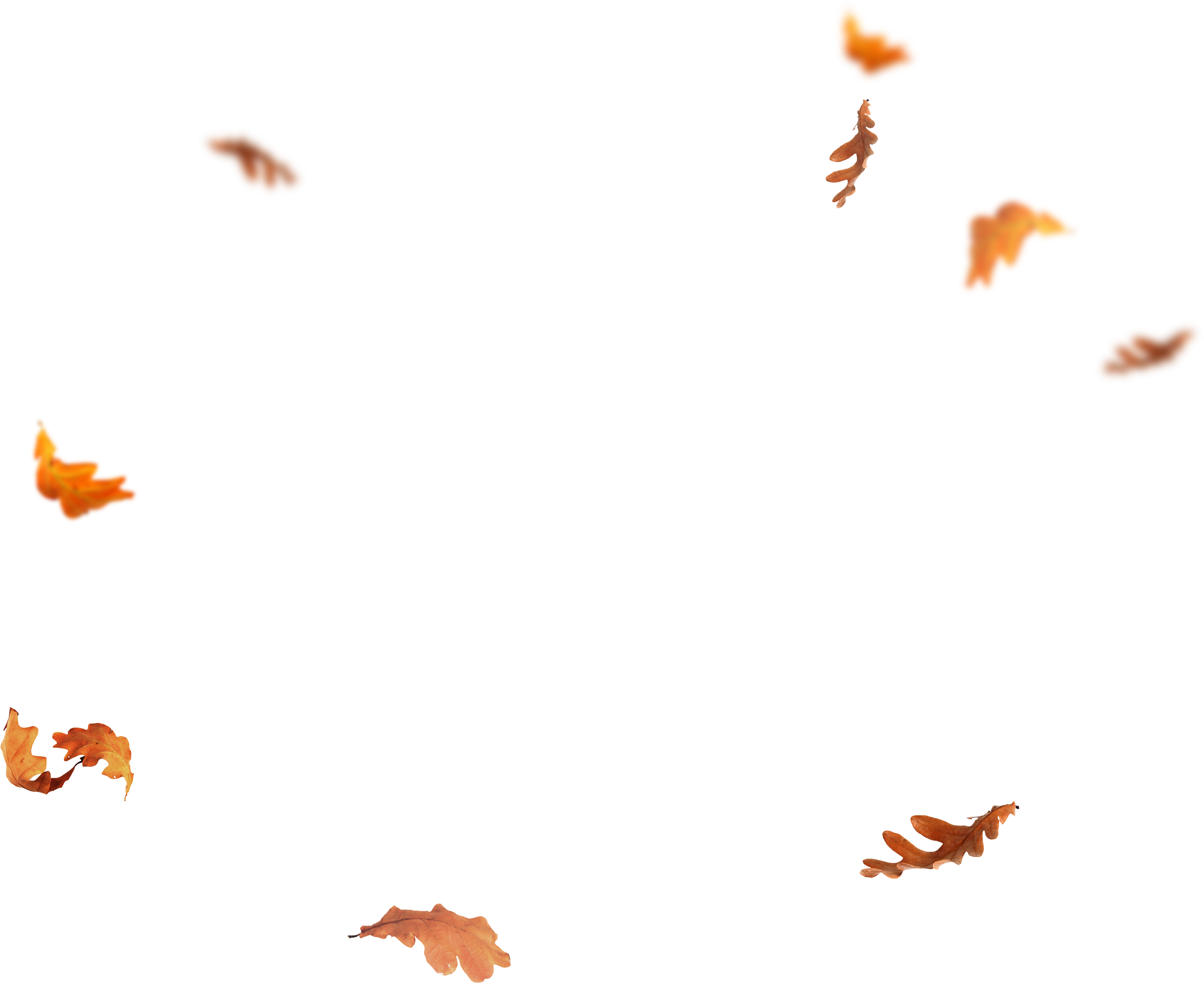 Download Falling Leaves Png Images Flying Autumn Leaf Png Free Fall Leaves Png Autumn Leaves Png Images