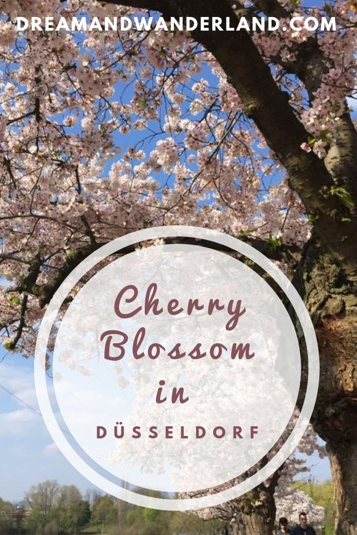 Sakura In Dusseldorf Or Where To Find The Best Spots To See Cherry Blossom Dream And Wanderland Spring Travel Destinations Spring Trip Travel Photography Inspiration