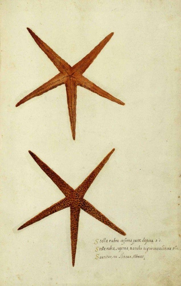 Vintage Seashell Print; Vintage Sea Shell Print ; Star Fish; Starfish