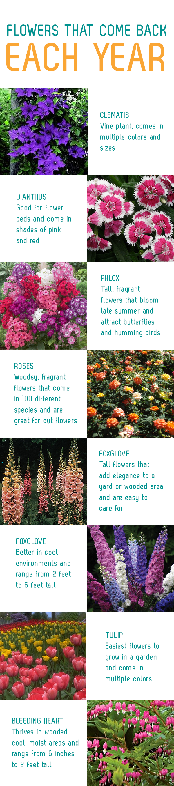 Flowers That Come Back Each Year Grow This Pinterest Garden