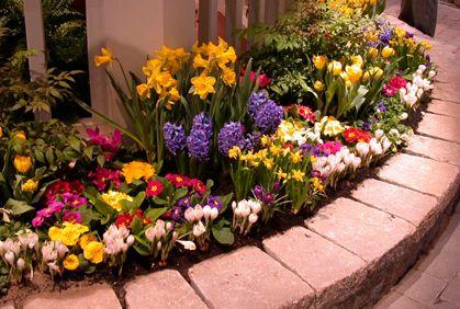 Photo of Flower Garden Pictures Ideas DIY Designs & Plans