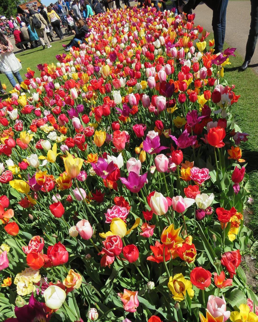 #keukenhof #holland #tulip #colorful #nikon #nikon1 #j5 #travel #digitalcamera #キューケンホフ #キューケンホフ公園 #チューリップ #チューリップ畑 #オランダ #ヨーロッパ #海外旅行 #ニコン #コンデジ #コンデジ写真部 #デジカメ #花 #花畑 #flowers #photography #photo #写真撮ってる人と繋がりたい #写真好きな人と繋がりたい #大型連休 #ゴールデンウィーク #goldenweek by vactorian