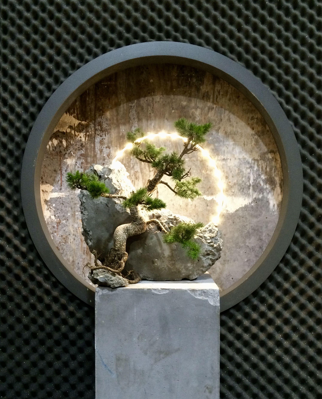 Bonsai And Concrete Lamp Concretelamp Bonsai Tree Japanese Bonsai Bonsai Art