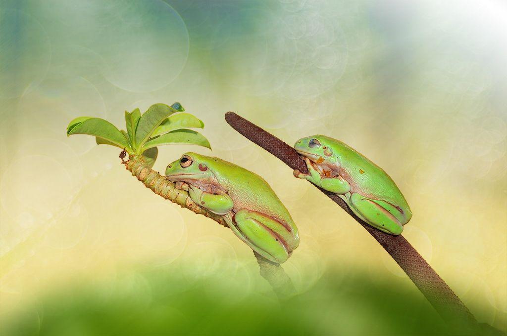 Sleep dumpy by Andri Priyadi on 500px