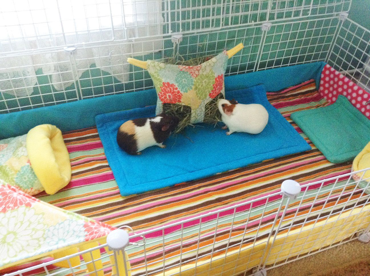 wheel water cage habitat supplier from garden item with cages house playground guinea pig in bottle animal hamster home on feeder small story silent pet
