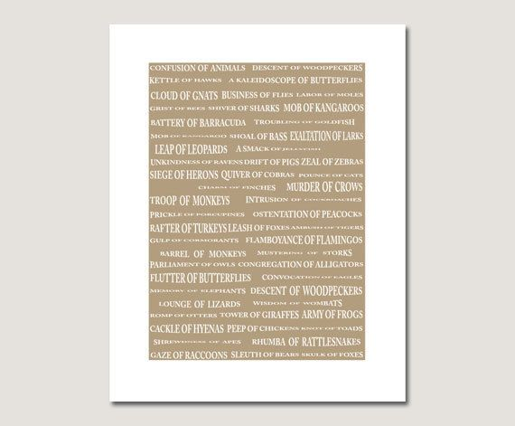 Humorous Animal Group Names Typography Poster Print Inches