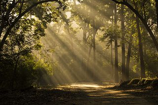 Green Gold - From the Jungles Of Jim Corbett | por PS Anand