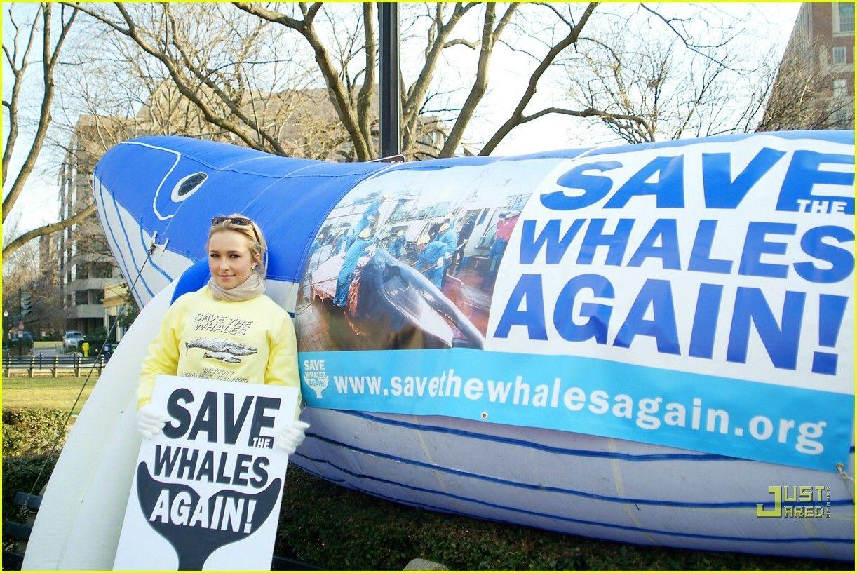Hayden Panettiere Animal Rights Activist Animal Rights Activist Save The Whales Animal Rights