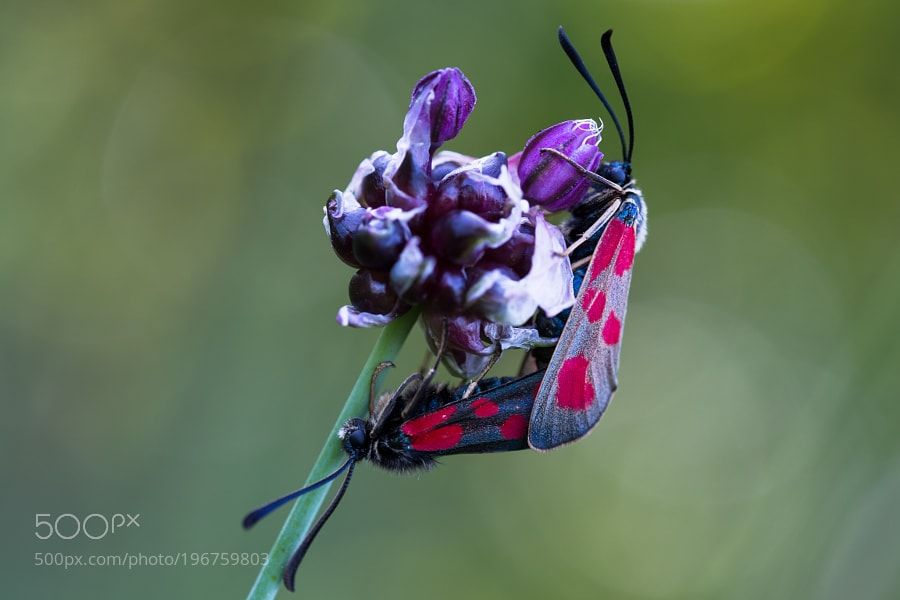 Spotted Love by ChristinaObermaier