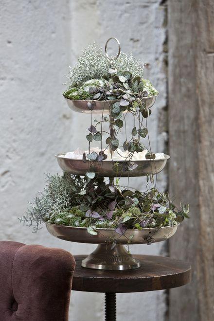 Floradania Marketing This winter's plant trend, Tales of Flowers Ceropegia Woodii Blumen  ~ 23202556_Sukkulenten Im Winter Umtopfen