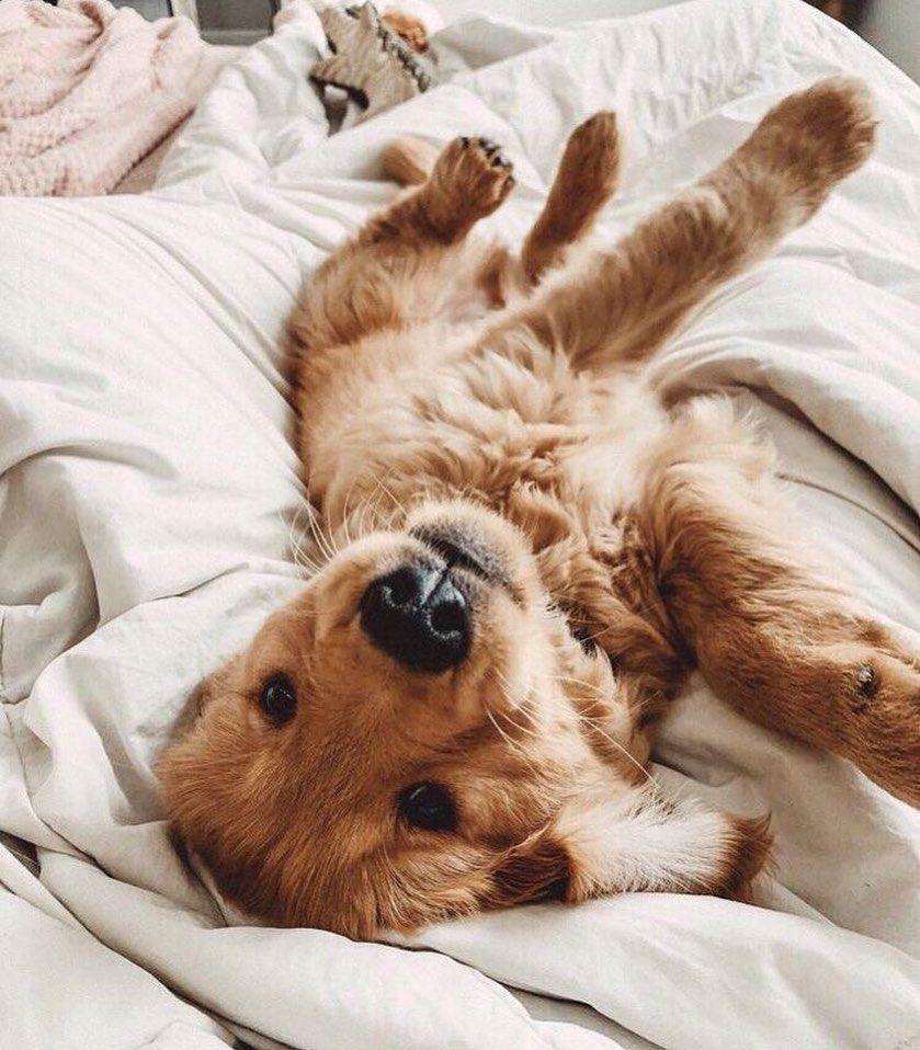 Pin By Trinity On Doggos Puppies Cute Baby Animals Retriever Puppy