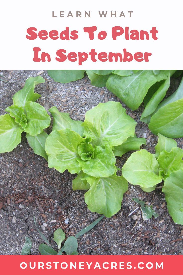 5 Crops you can still plant in September Food garden
