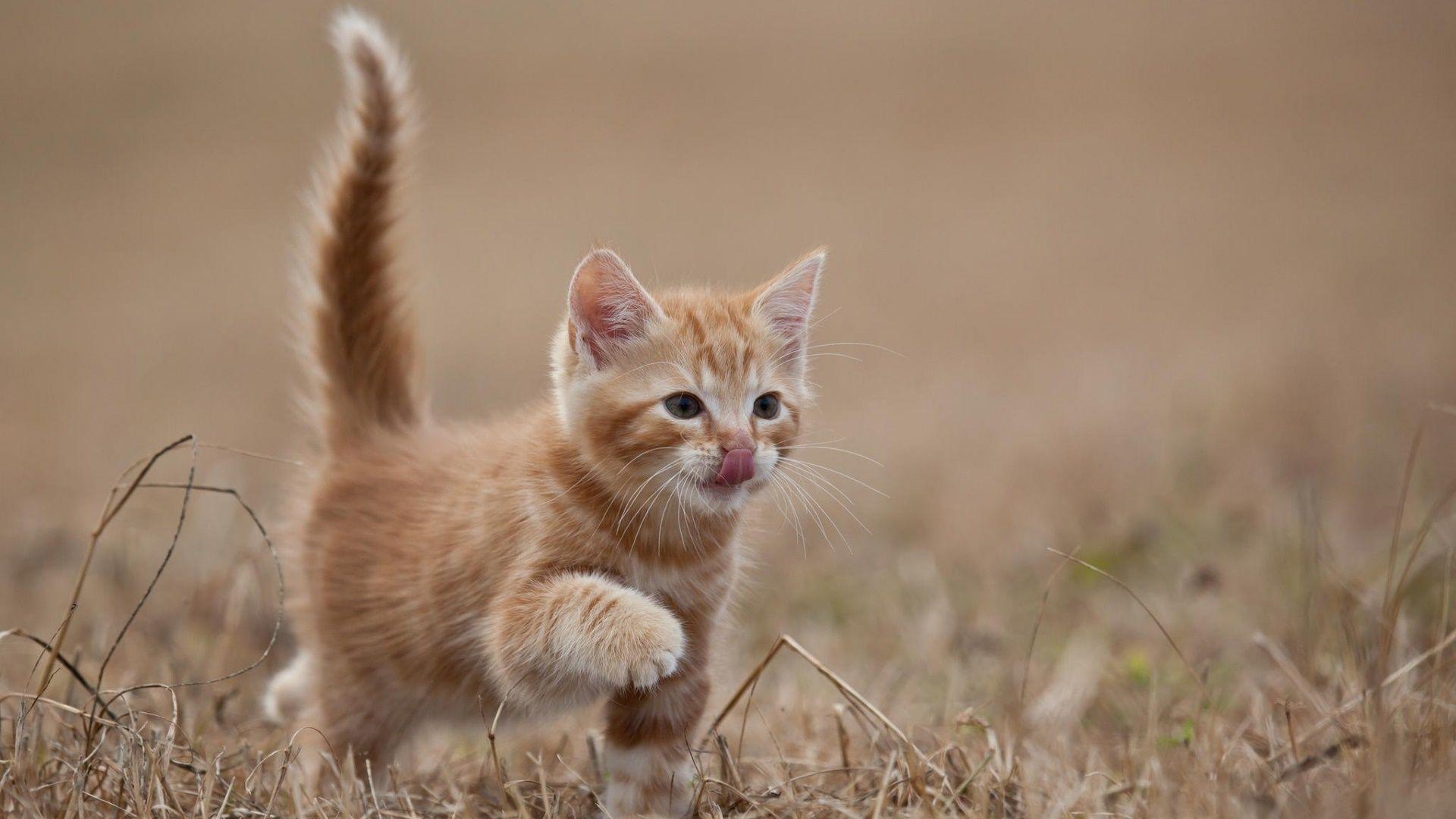8 Mignons Chatons 8 Cute Kittens Voyage Onirique En 2020 Animaux Les Plus Mignons Animal Domestique Animales