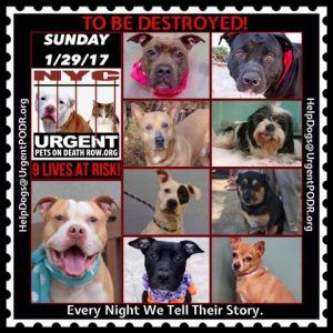 9 Lives At Risk 2b Destroyed Tomorrow Sunday Please See Read