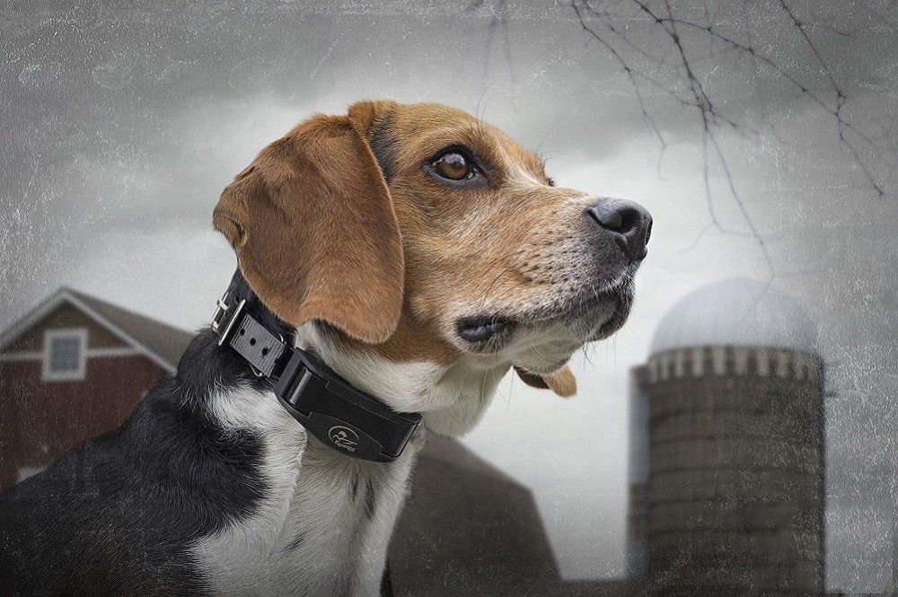 Sportdog Brand Nobark Sbcr Waterproof Rechargeable Bark Control