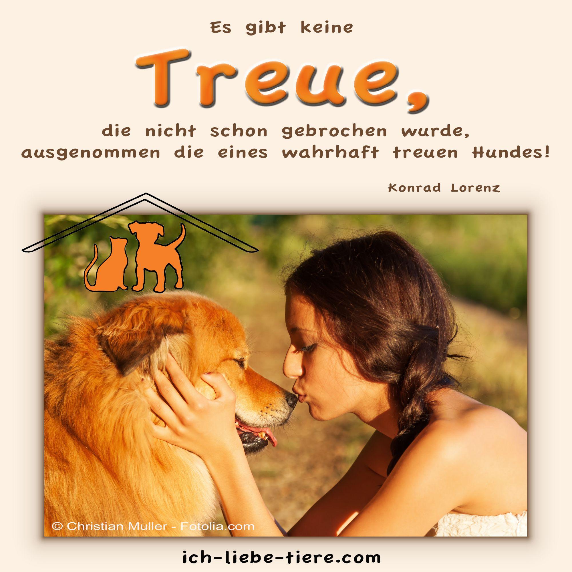 Es gibt keine Treue, die nicht schon gebrochen wurde, ausgenommen die eines wahrhaft treuen Hundes.  http://www.ich-liebe-tiere.com/