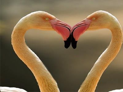 Love Birds Images Hd Wallpaper Background Pictures Free Download