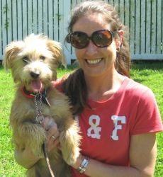 Izzie is an adoptable Yorkshire Terrier Yorkie Dog in Union City, TN. Meet Izzy! This sweet boy is a Yorkie/Schnauzer Mix, just a good ole Scruffy Baby :) He is approximately 15 lbs. Izzy wasa stray ...