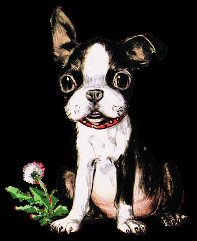 Graphics 05 Png 800 1 053 Pixels Boston Terrier Puppy Boston Terrier Funny Boston Terrier Art