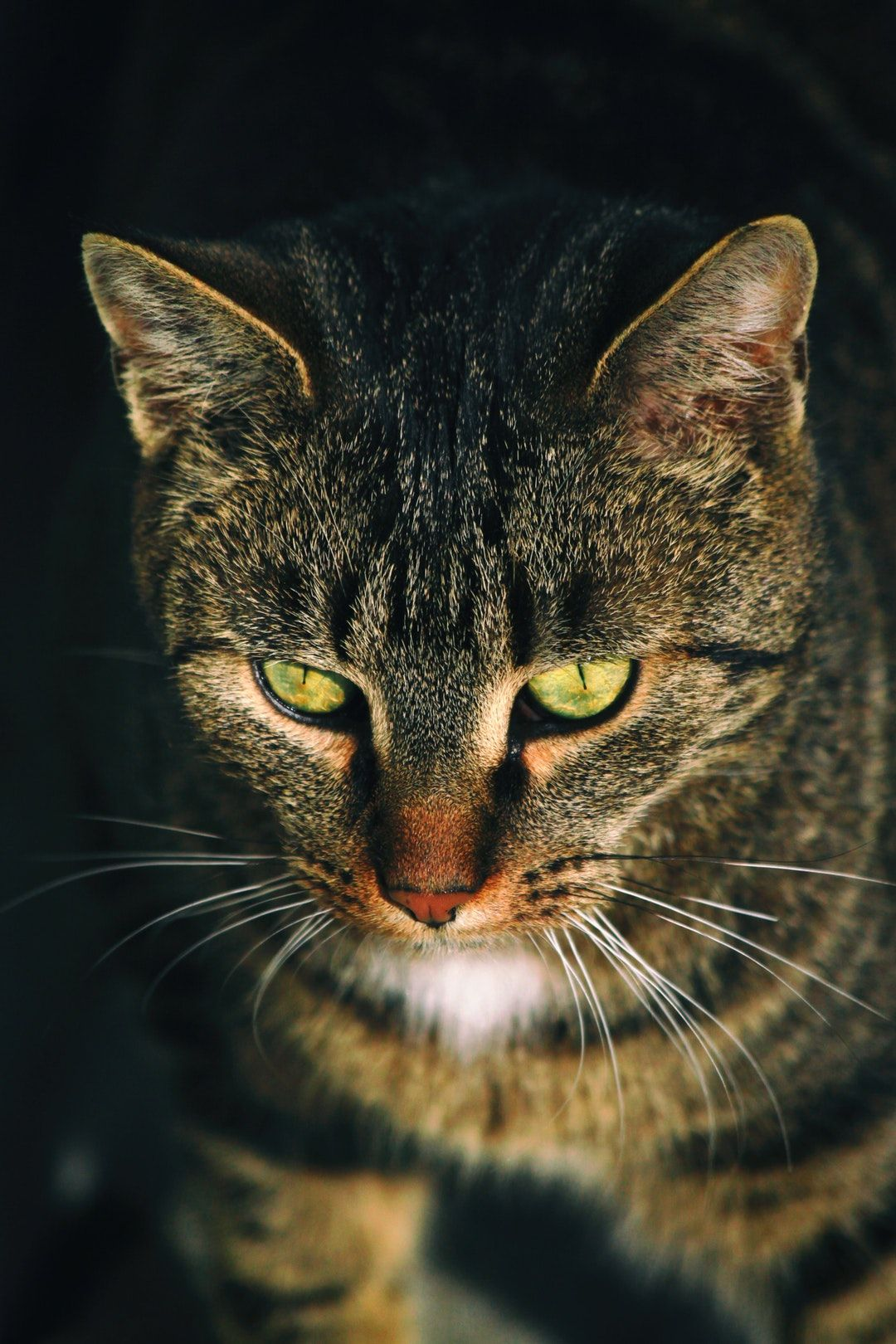 Photo By Markus Gombocz Unsplash cats pets&animals