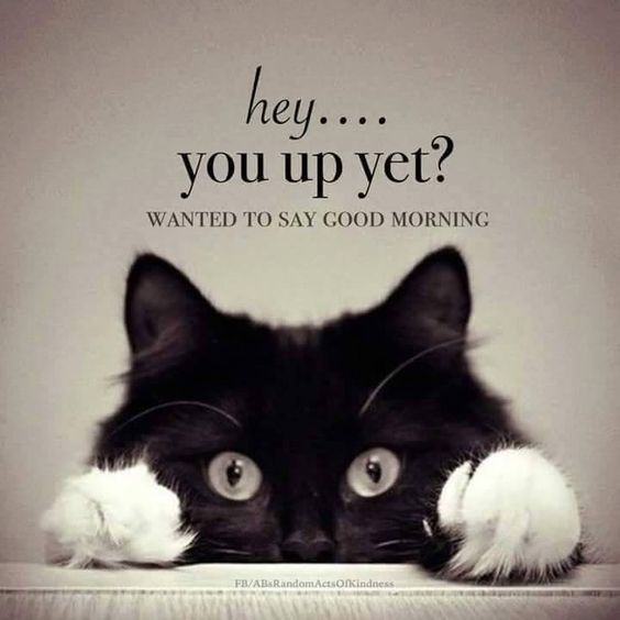 Hey You Up Yet Cute Cat Positive Kitten Great Good Morning Good Morning Photo P Good Morning Beautiful Quotes Funny Good Morning Memes Morning Quotes Funny